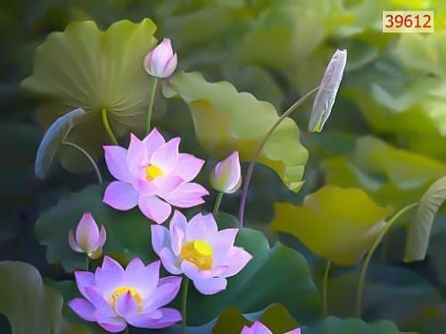 tranh-hoa-sen-gia-re-06