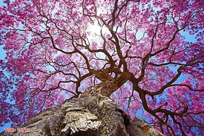 trần xuyên sáng hoa lá
